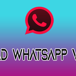 download fouad whatsapp